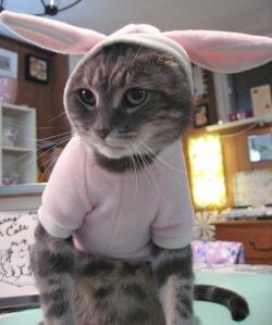 Kittty Accepting His Award Wardrobe Change 2