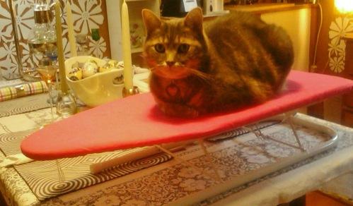 Kitty Ironing