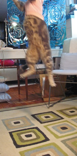 Kitty Jumping Right out of Camera View!!