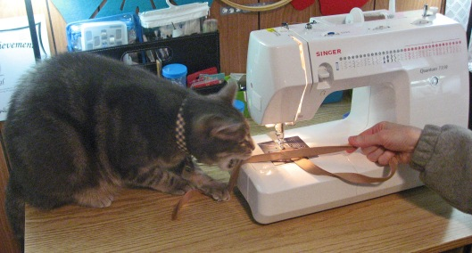 Kitty Sewing