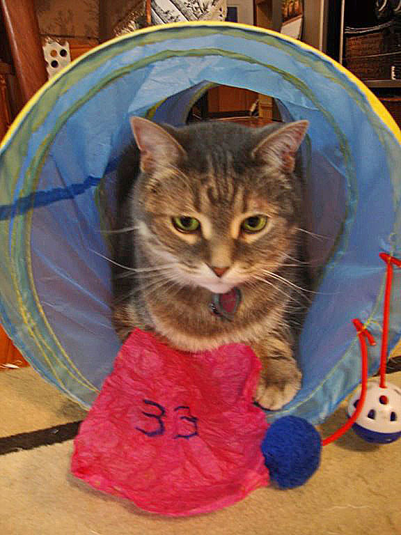 Kitty retiring to his tunnel tube with the winning number to contemplate Life, Love and the Pursuit of Happiness