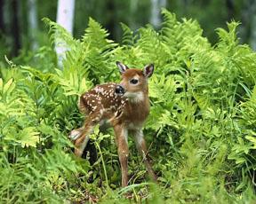 spring - baby animals 2