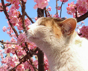 Spring Kitty