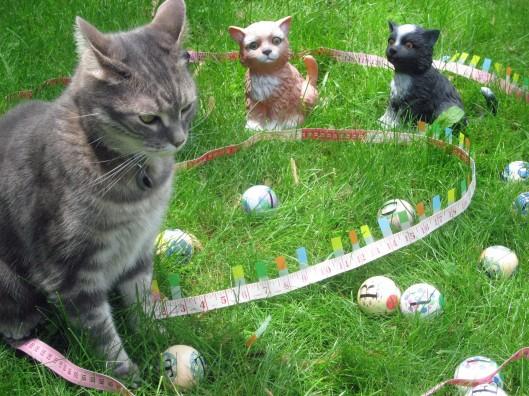 Three Bocce Balls Make It Into the Winners Circle