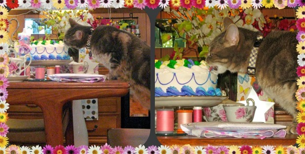 Kitty Enjoying Cake