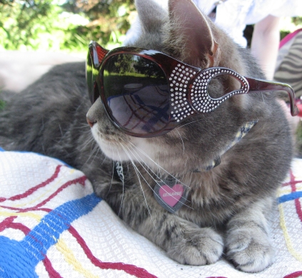 Kitty in Sunglasses