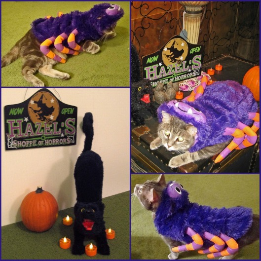 Boris the Spider Kitty Collage
