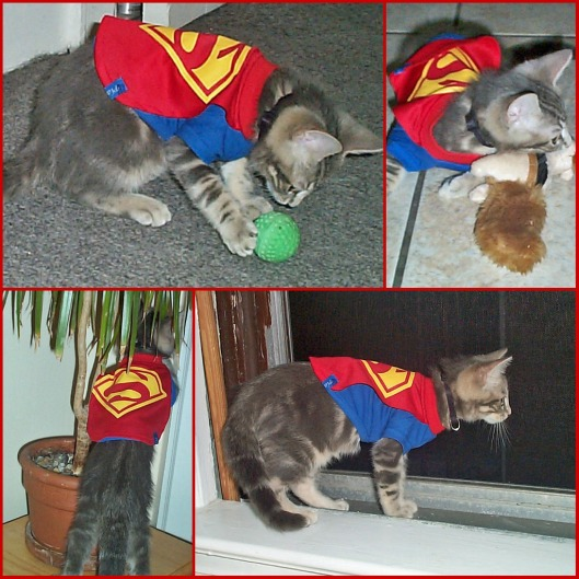 Super Kitty