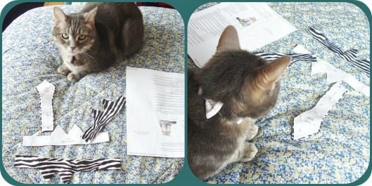 Kitty Prepping Collar and Tie