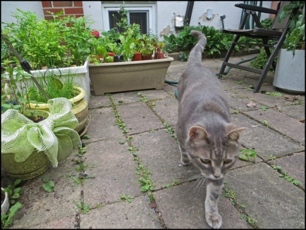 Kitty's Eye View of the Garden.