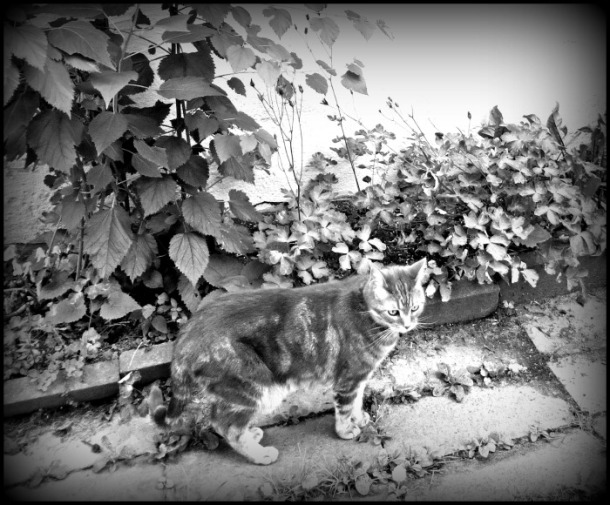 Kitty.  Looking Dramatic in Monochromatic.